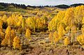 BOULDER MT, GARFIELD COUNTY, UT - 2016-09-30 fall color (7) (30415288645).jpg