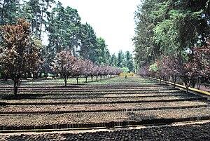 Viveros de Coyoacán - Plant beds at Viveros