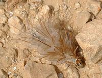 Bagworm moth - Wikipedia
