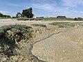 Baie Somme Hourdel - Cayeux-sur-Mer (FR80) - 2021-05-29 - 62.jpg