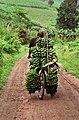 Banana carrier Uganda.jpg