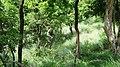 Bandipur Tiger Reserve @ Gopal Swami Betta - panoramio (1).jpg