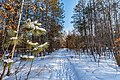 Banning State Park, Minnesota - Winter Hiking Trail (39756856245).jpg