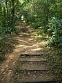 Bartina forest, stairs, 2016 Szekszard.jpg