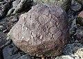 Basalt boulder, Balcreuchan Port, South Ayrshire.jpg