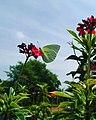 Beautiful butterfly with flower.jpg