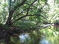 Beaver creek at New Indian Ridge Preserve.jpg