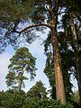Bedgebury Pinetum 8.jpg