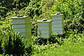 Bee hives near Place House (9033).jpg