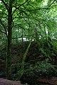 Beeches, Den o' Alyth - geograph.org.uk - 1429666.jpg