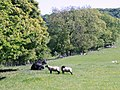 Beef and mutton elect - geograph.org.uk - 1340782.jpg
