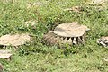 Beejamandal Temple, ASI Excavation Site 12.jpg