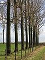 Beemden Tienen - panoramio.jpg