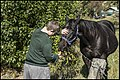 Ben feeding Black Beauty-1 (28132505921).jpg