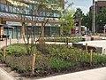 Beplanting Plein winkelcentrum Heksenwiel DSCF7466.jpg
