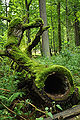 Bialowieza National Park in Poland0028.JPG