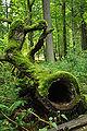 Bialowieza National Park in Poland0028.JPG