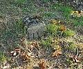 Biecz, cmentarz wojenny nr 105 (HB7).jpg