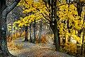 Bielsko-Biała szlak na Szyndzielnię 1.jpg