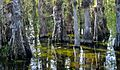 Big Cypress National Preserve.jpg