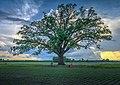 Big Tree with spring picnic.jpg