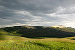 A mountain meadow in Bighorn National Forest.