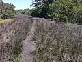 Bike Trail, Jekyll Island, GA - panoramio (5).jpg