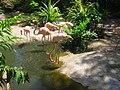Biouniverzoo, Chetumal, Q. Roo - panoramio.jpg