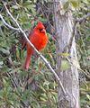 Bird (5816015390) (2).jpg
