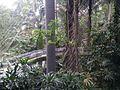 Bird Park in Kuala Lumpur (Malaysia) (36).jpg