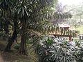 Bird Park in Kuala Lumpur (Malaysia) (38).jpg