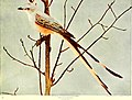 Birds and nature in natural colors - being a scientific and popular treatise on four hundred birds of the United States and Canada (1913) (14775193823).jpg