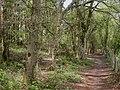 Black Hill, woodland - geograph.org.uk - 1268413.jpg