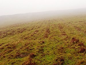 Bracken - Bracken in Ireland with a linear pattern running across the hillside, a possible indication of past cultivation.