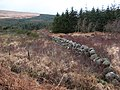 Boggy clearing - geograph.org.uk - 314376.jpg