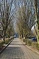 Bornem Bornem BP Sint-Amandsesteenweg (40) - 304698 - onroerenderfgoed.jpg