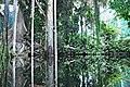 Bosque inundado-cosmocaixa 2014 (6).JPG