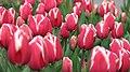 Botanic Garden - Cluj Napoca (2439483144).jpg