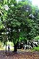 Botanic garden limbe113.jpg