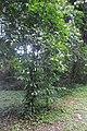 Botanic garden limbe138.jpg