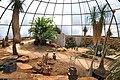 Botanischer Garten der Universität Zürich - Kuppel - Innenansicht 2011-08-21 14-02-34.jpg