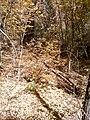 Boynton Canyon Trail, Sedona, Arizona - panoramio (113).jpg