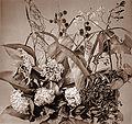 BraunA Blumen1.jpg
