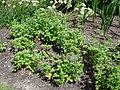 Bressingham Steam and Gardens 02.jpg
