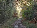 Bridleway in the western end of High Wood - geograph.org.uk - 1594296.jpg