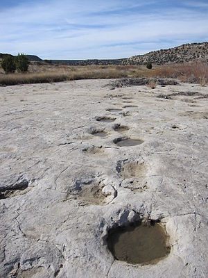 Comanche National Grassland - Fossilized brontosaur tracks in Picketwire Canyon.