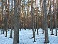 Bryansky District, Bryansk Oblast, Russia - panoramio (22).jpg