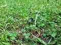 Buba u travi.jpg