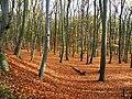 Buki koło Międzyzdrojów - panoramio.jpg