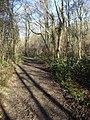 Bushcomb Wood - geograph.org.uk - 299046.jpg